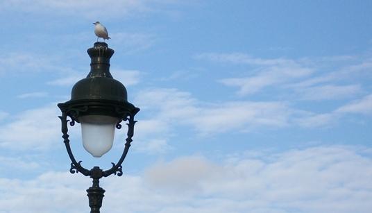 Чайка на площади Согласия