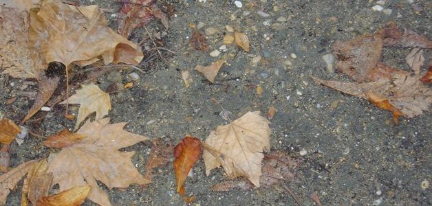 Опадшие листья на Елисейских полях