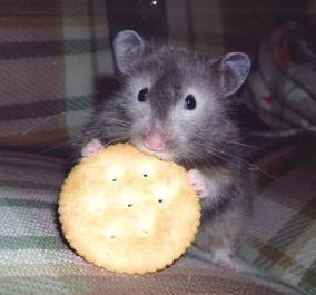 hamster-eating-alone
