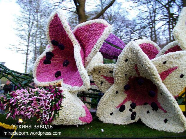 цветочное шествие голландия