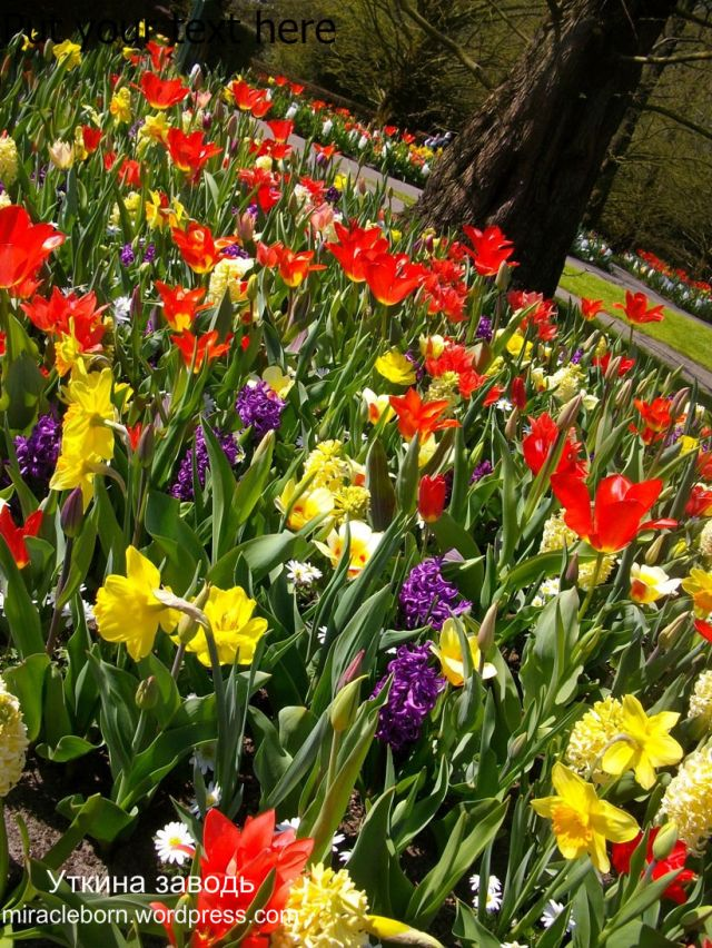 парк цветов нидерланды
