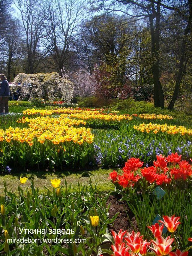 знаменитый парк тюльпанов голландия