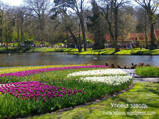 знаменитый парк цветов голландия